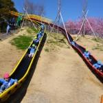 蓮華寺池公園に行ったよ!